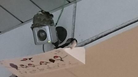 立川駅のつばめさん